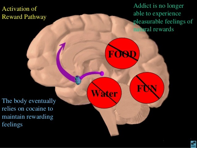 This Is Your Brain on Nicotine.