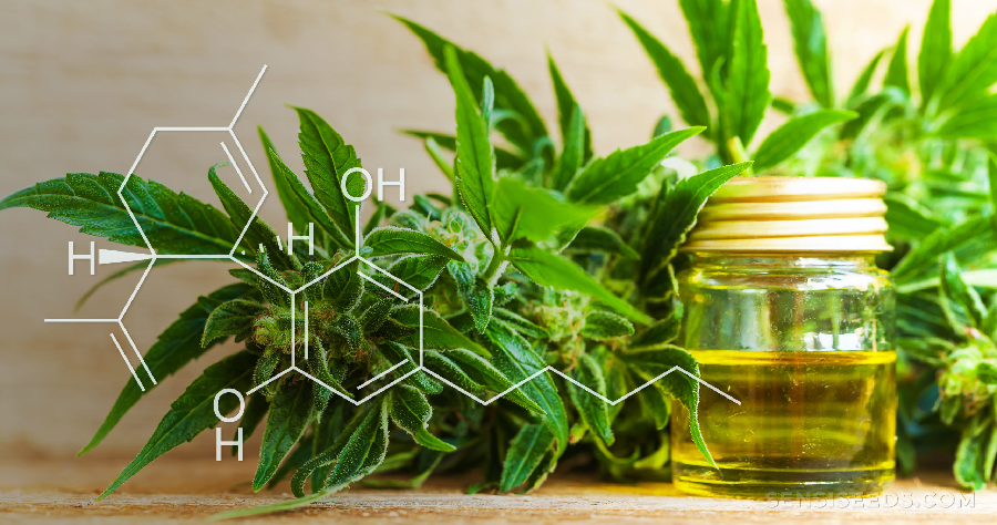 How to find the quality cbd oils?