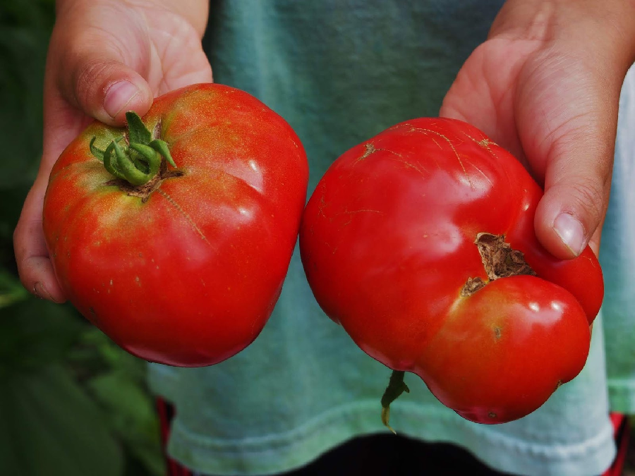 5 Tips for Preparing a Healthy Harvest